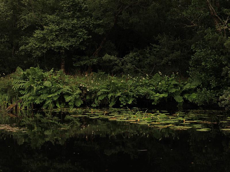 lakes-edge